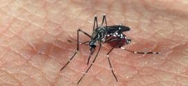 Instituto Evandro Chagas confirma primeira morte por vírus Zika no país