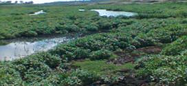 Barragem de Brotas entra em colapso