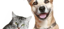 Afogados realizará campanha de castração de cães e gatos