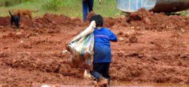 Volta a crescer número de crianças de 05 a 09 anos que trabalham no Brasil